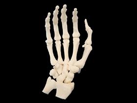 KINGS 600Pro Medical 3D printer